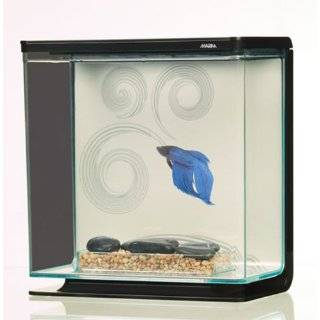 Betta fish tanks for Unique betta fish tanks
