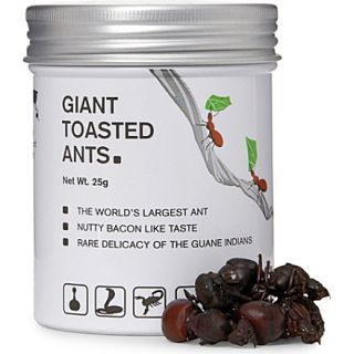 Giant toasted ants 25g   EDIBLE   Food gifts   Shop Food   Food & Wine