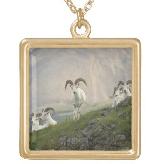group of Dall sheep rams rest on Marmot Rock Necklaces