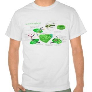 C4 Photosynthesis Diagram T Shirt