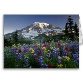 USA, Washington, Mt Rainier NP, Spectacular 2 Cards