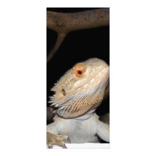 Bearded dragon 2 full color rack card