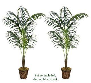 Two 8' Artificial Kentia Palm Trees Tropical Silk Plant
