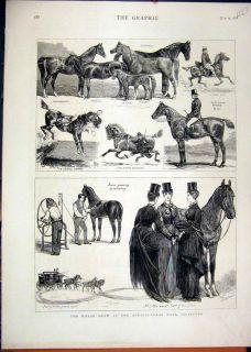 Antique Horse Print