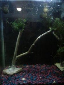 Living Aquarium Decoration Fish Tank Bonsai Java Moss Live Shrimp Plant Nice