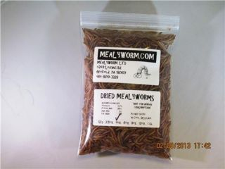 Freeze Dried Mealworms w Simple N Save SHIP Today Order by 10 A M US Owned