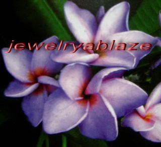 "Cutting of Plumeria Plants ""King Purple"" 12 15 Inches"