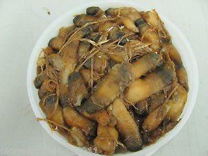 Fresh Frozen Clam Necks 400 Pcs Bait Pet Food Aquarium Fish Protein Reptile