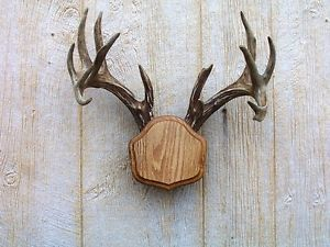 Medium Oak The Deer Stand Antler Mounting Kit
