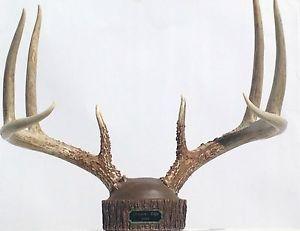 Buckstumps Deer Antler Mounting Kit