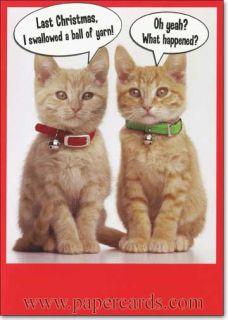 2 Kittens Funny Cat Christmas Card Greeting Card by Recycled Paper Greetings