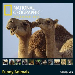 National Geographic Funny Animals 2011 Square Wall Cal: National Geographic: Bücher