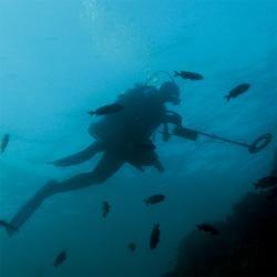 Treasure Cove Underwater/ Surf Metal Detector TC 7010 Treasure Cove Metal Detectors and Prospecting Kits