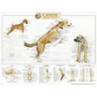 Canine Internal Organ Anatomy Chart (9781587795077